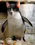 Postais de Pinguicat