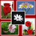 Postais de Jardim de flores