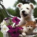 Postais de Entre cão e gato