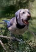 Postais de Dogybird