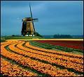 Postais de Flores e moinho de vento