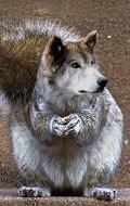 Clique na imagem para enviar o postal: wolf