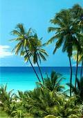 Postais de Living in paradise