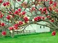 Postais de Primavera