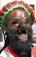 Postais de JamaicaDog